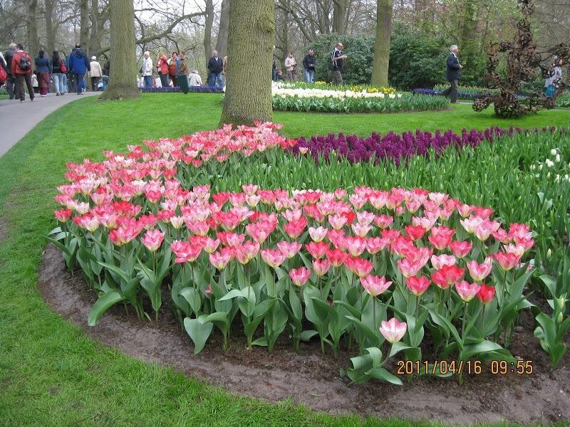 Keukenhof-tulip (1)