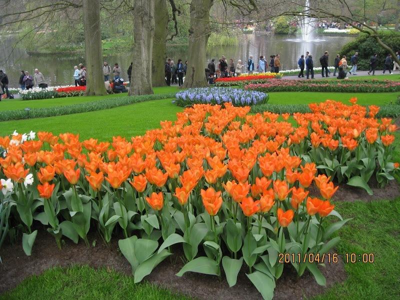 Keukenhof-tulip (3)