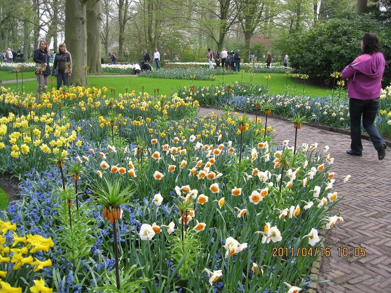 Keukenhof-tulip (4)