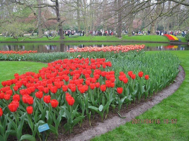 Keukenhof-tulip (5)