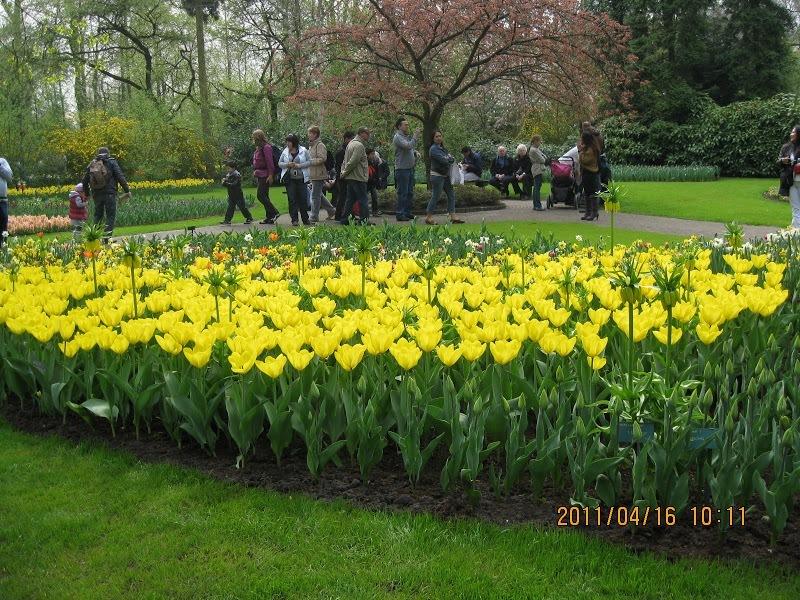 Keukenhof-tulip (6)