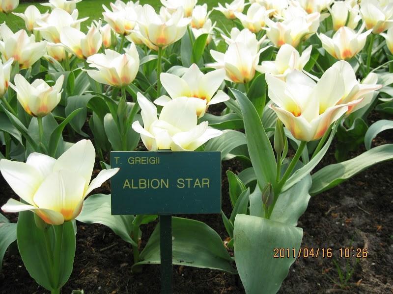 Keukenhof-tulip (8)