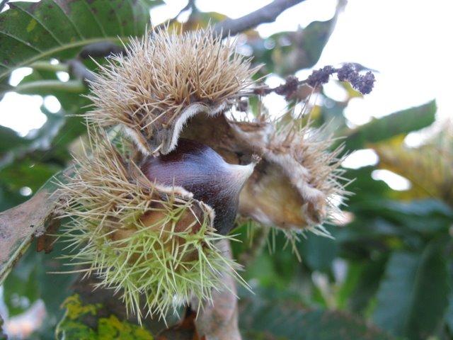 magnel-lab-chestnut-2011 (6)