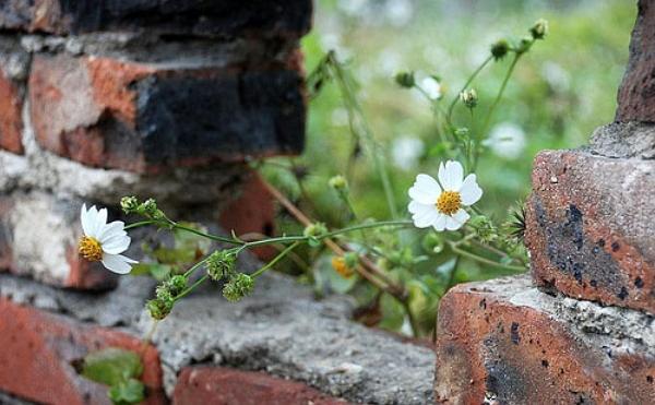鲜花总会长出来,不在墙这边相见,就在墙外面思念。